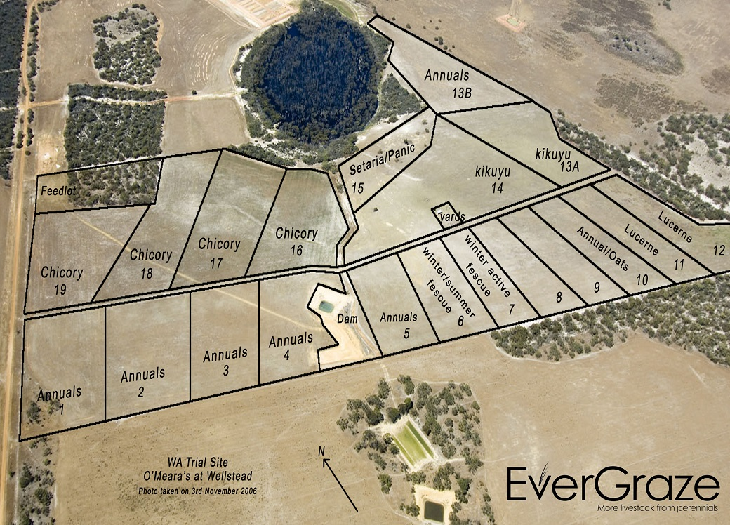 Figure 1. Layout of EverGraze Proof Site at Wellstead in 2006.