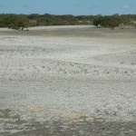 Deep sandy soils prone to wind erosion before perennials were sown.