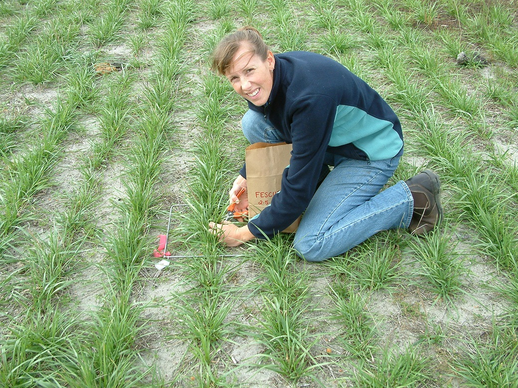 Paula Jacobsson taking a pasture cut in the newly established tall fescue pasture at the Proof Site in May 2006.