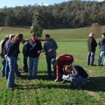 Tallangatta Valley EverGraze Supporting Site