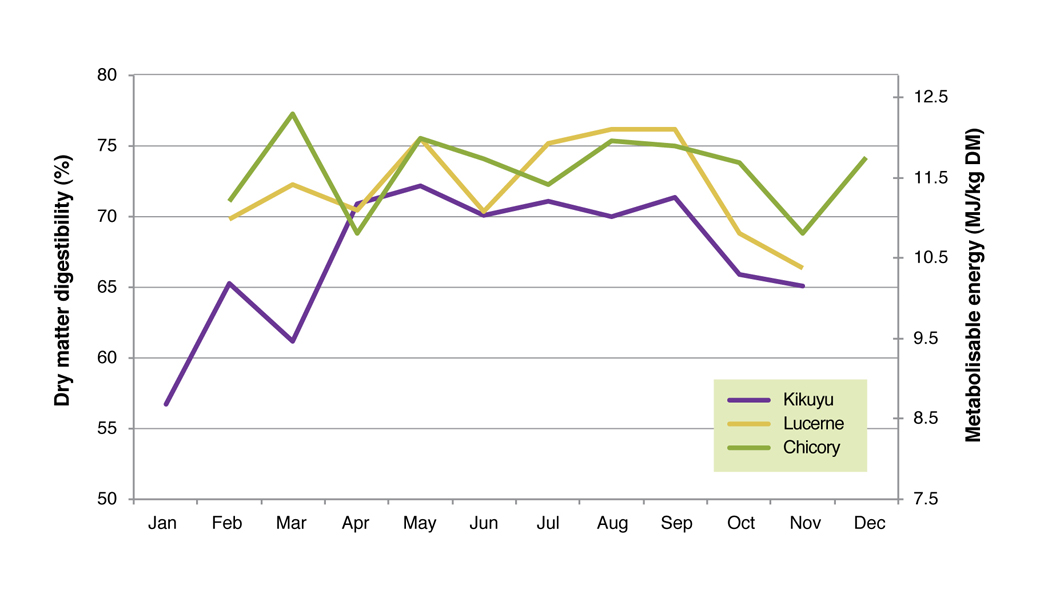 Figure 6. Dry matter digesibility and metabolisable energy of kikuyu, lucerne and chicory averaged over 2006 to 2008 at the Proof Site in Wellstead.