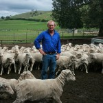 Chris Shannon found that grazing ewes on lucerne increased ovulation rates.