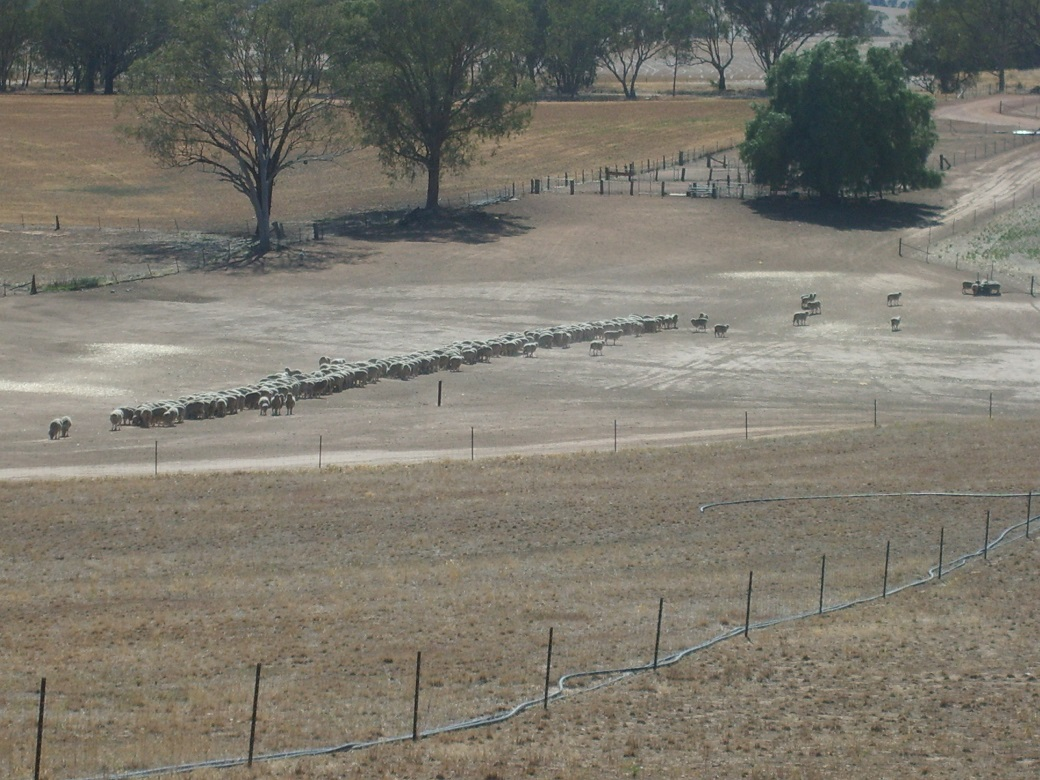 Containment areas (bottom of the hill) were used to protect pastures (foreground) and soils when ground cover fell below 70% during the severe drought years.