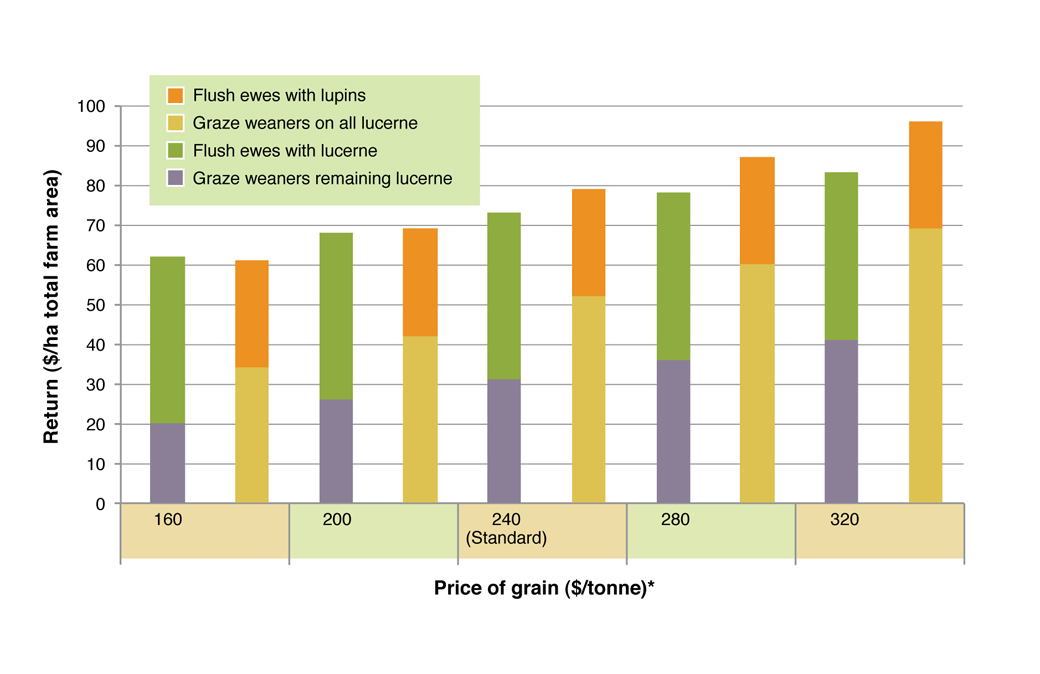 Figure 6. Comparison of returns from flushing ewes and grazing weaners on green feed under five grain price scenarios. See Table 2 for assumptions used in this analysis.