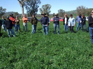 Producers participating in a bus trip observe the productive phalaris/sub-clover pastures at 'Spring Valley'