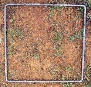 20% ground cover
