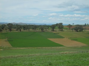 Phalaris on the crest, tall fescue on the valley floor and lucerne on the slopes persisted for more than eight years at the Wagga Wagga Proof Site