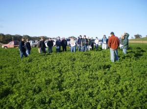 Lucerne provided quality feed for finishing lambs at Mooneys Gap