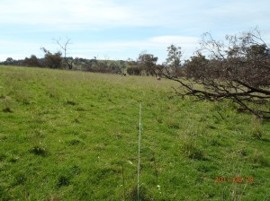 Dividing the Big Hill paddock enabled better grazing control leading to improved pasture utilisation and reduced over grazing.