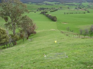 The 'control' paddock at Tallangatta Valley Supporting Site where the upper and lower slopes were managed in a single paddock